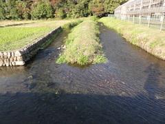 第三回 自然に親しむ「水路や小河川が育む水生生物」 [ 2017年09月09日 ]